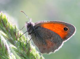 Metamorphische Methode - wie von der Raupe zum Schmetterling